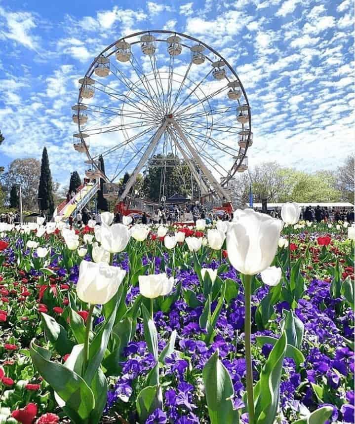 Lễ hội hoa Floriade ở Canberra