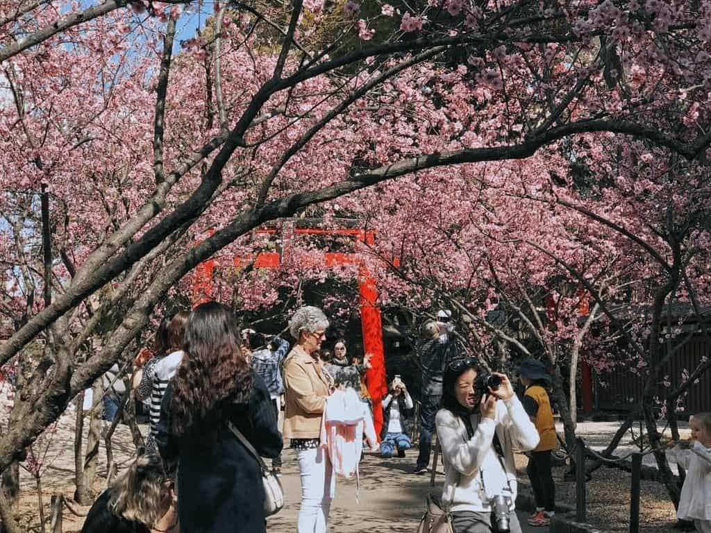 Lễ hội hoa anh đào ở Melbourne