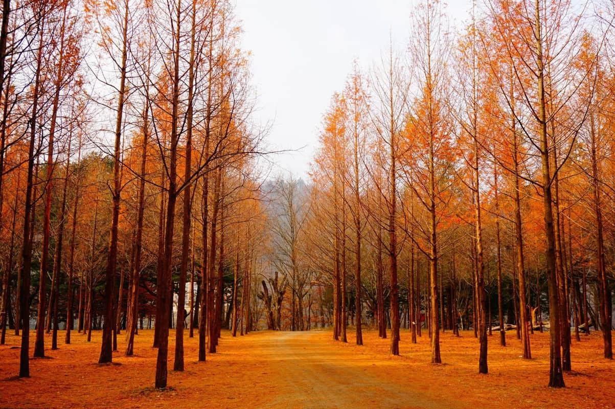 tour du lịch hàn quốc mùa thu