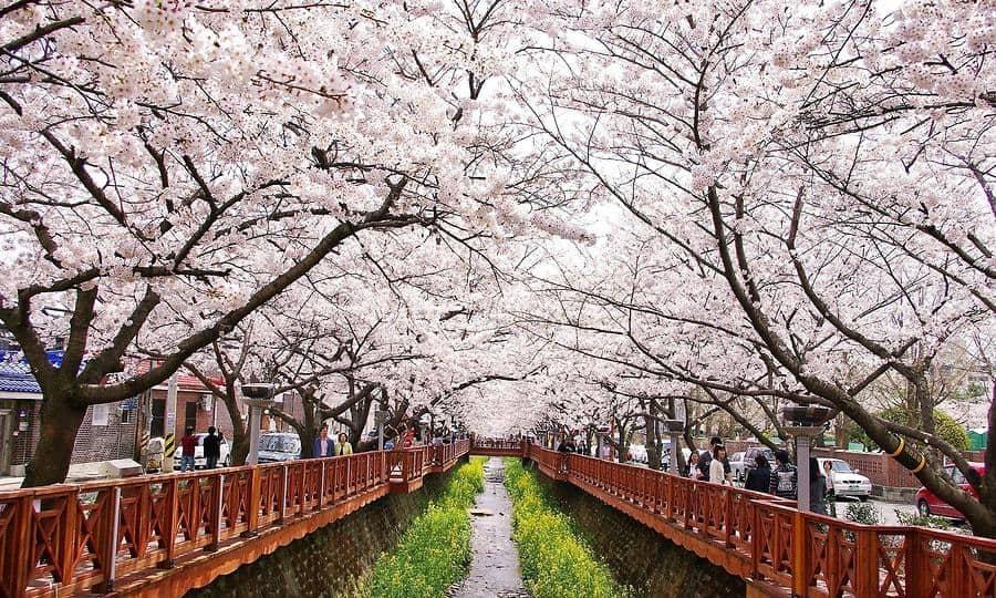 Công viên Yeouido Seoul Hàn Quốc